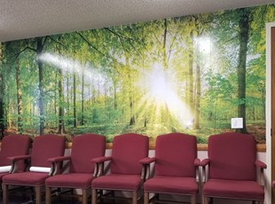 Interior Reception Wall Graphics with Forest Scene